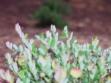 biljka-u-vegetaciji-3