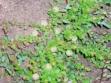 biljka-u-vegetaciji-4