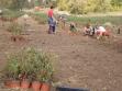 Prosirivanje maticnjaka i plantaze